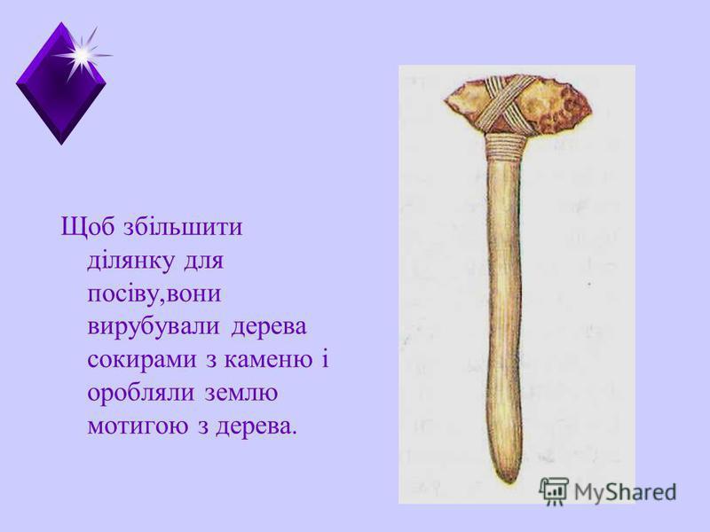 Щоб збільшити ділянку для посіву,вони вирубували дерева сокирами з каменю і оробляли землю мотигою з дерева.
