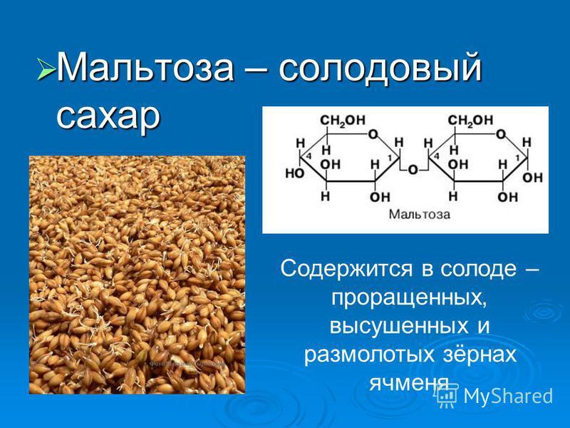 Мальтоза – солодовый сахар Мальтоза – солодовый сахар Содержится в солоде – проращенных, высушенных и размолотых зёрнах ячменя
