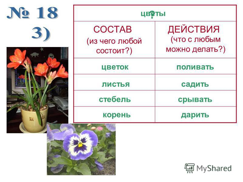 (из чего любой состоит?) (что с любым можно делать?) цветы поливать садить срывать ДЕЙСТВИЯСОСТАВ цветок листья стебель дарить корень ?