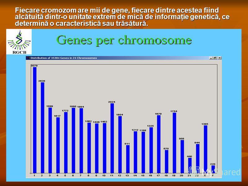 Fiecare cromozom are mii de gene, fiecare dintre acestea fiind alcătuită dintr-o unitate extrem de mică de informaţie genetică, ce determină o caracteristică sau trăsătură.