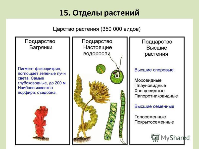 15. Отделы растений