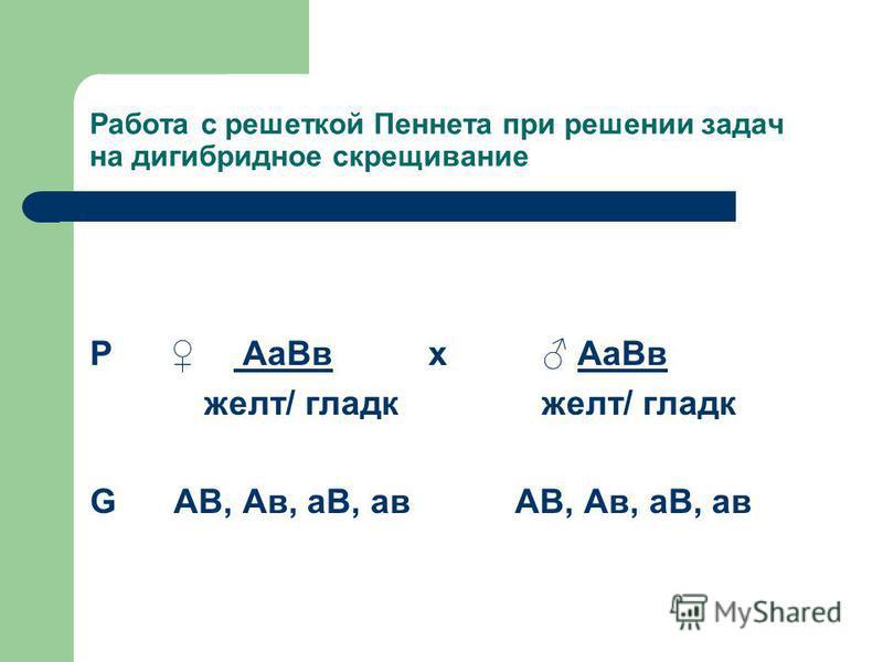 Работа с решеткой Пеннета при решении задач на дигибридное скрещивание Р Аа Вв х Аа Вв желт/ гладкоооо желт/ гладкоооо G АВ, Ав, аВ, а в АВ, Ав, аВ, а в