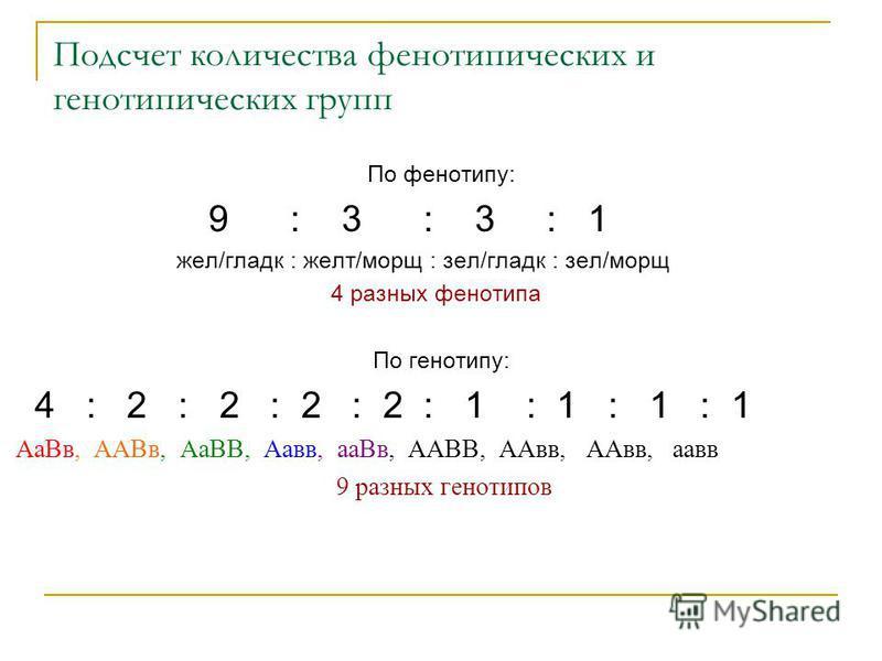 Подсчет количества фенотипических и генотипических групп По фенотипу: 9 : 3 : 3 : 1 жел/гладкоооо : желт/моро : зал/гладкоооо : зал/моро 4 разных фенотипа По генотипу: 4 : 2 : 2 : 2 : 2 : 1 : 1 : 1 : 1 Аа Вв, ААВв, АаВВ, Аа вв, а Вв, ААВВ, ААвв, ААвв