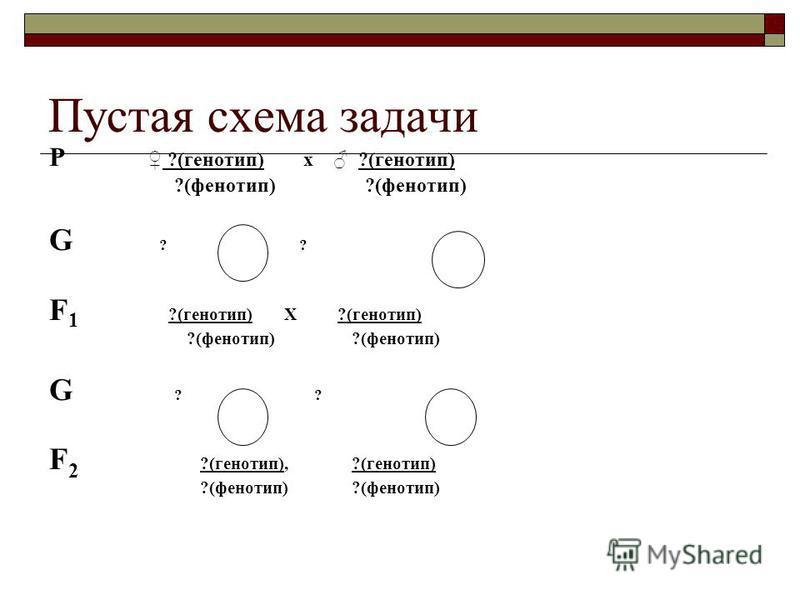 Пустая схема задачи Р ?(генотип) х ?(генотип) ?(фенотип) ?(фенотип) G ? ? F 1 ?(генотип) Х ?(генотип) ?(фенотип) ?(фенотип) G ? ? F 2 ?(генотип), ?(генотип) ?(фенотип) ?(фенотип)
