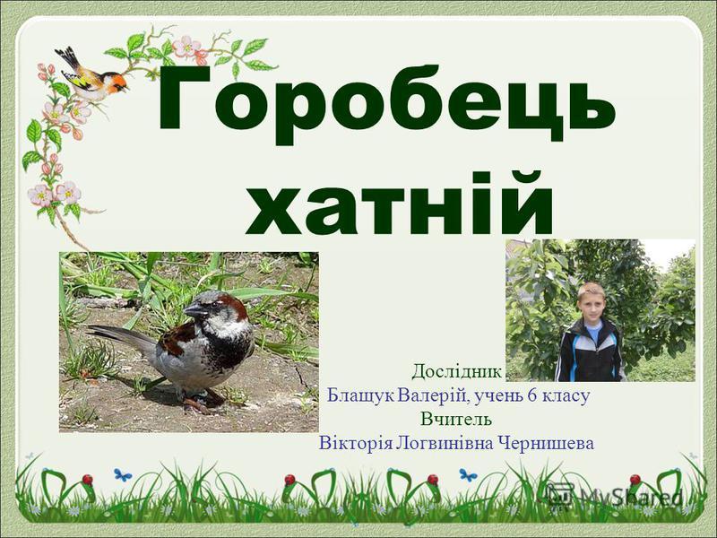 Горобець хатній Дослідник Блащук Валерій, учень 6 класу Вчитель Вікторія Логвинівна Чернишева