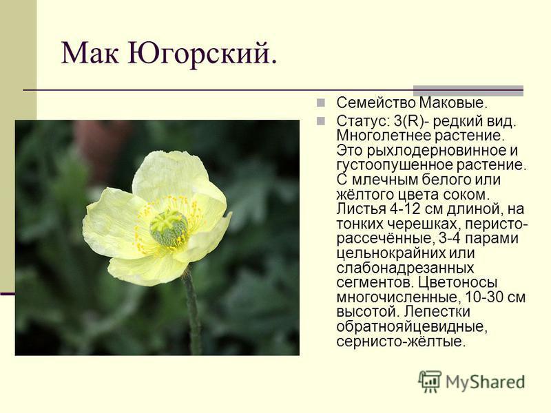 Мак Югорский. Семейство Маковые. Статус: 3(R)- редкий вид. Многолетнее растение. Это рыхлодерновинное и густоопушенное растение. С млечным белого или жёлтого цвета соком. Листья 4-12 см длиной, на тонких черешках, перисто- рассечённые, 3-4 парами цел