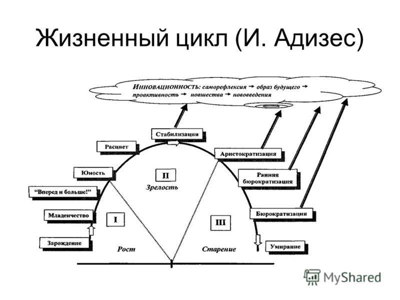 Жизненный цикл (И. Адизес)