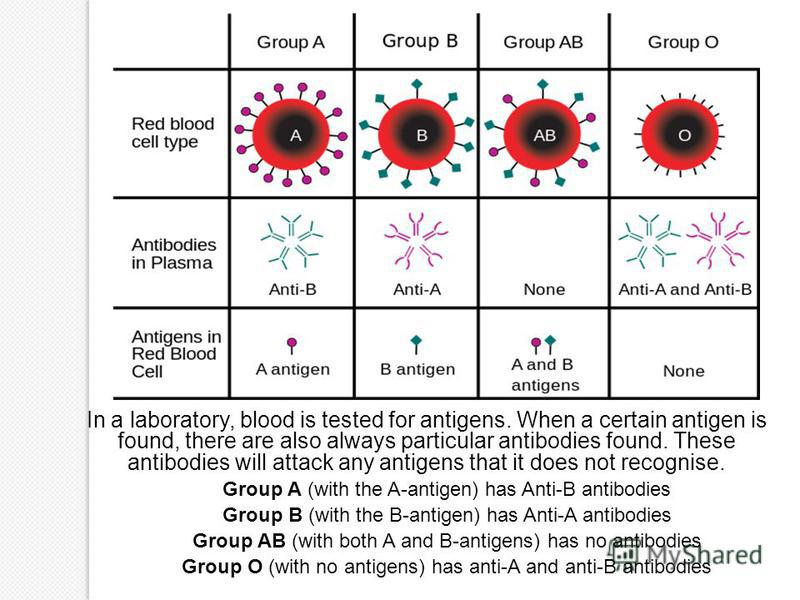 In a laboratory, blood is tested for antigens. When a certain antigen is found, there are also always particular antibodies found. These antibodies will attack any antigens that it does not recognise. Group A (with the A-antigen) has Anti-B antibodie