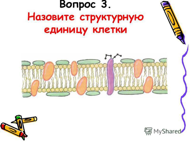 Вопрос 3. Назовите структурную единицу клетки