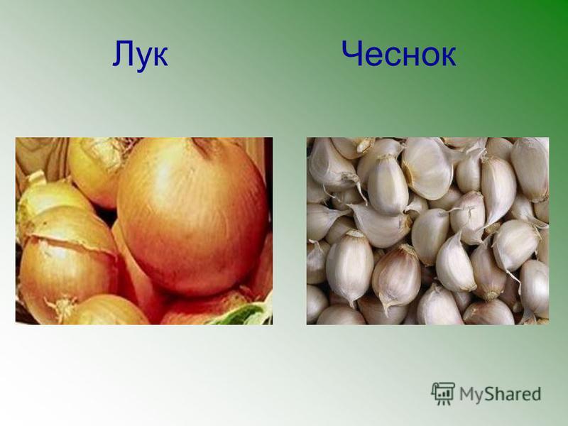 Лук Чеснок