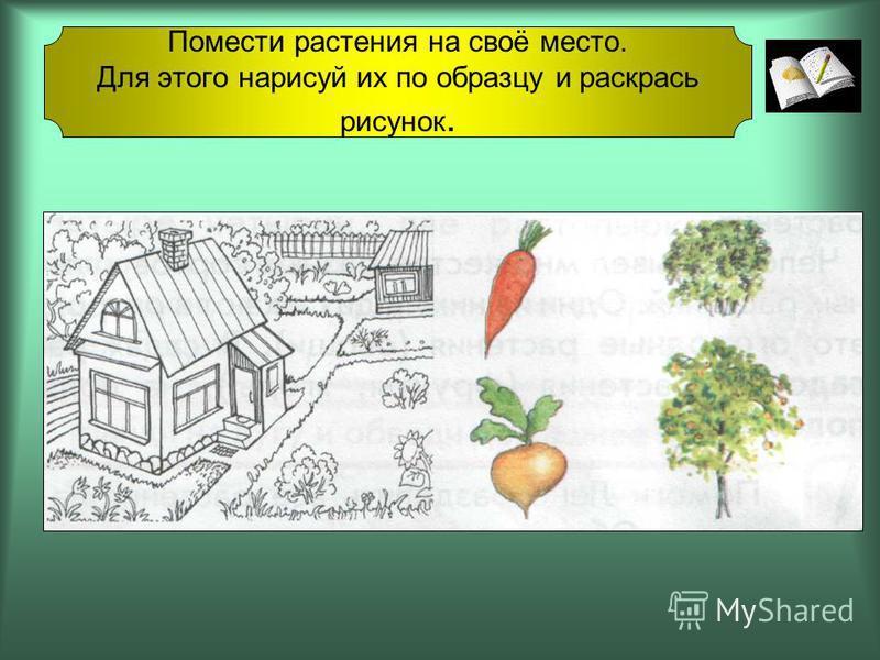 Помести растения на своё место. Для этого нарисуй их по образцу и раскрась рисунок.