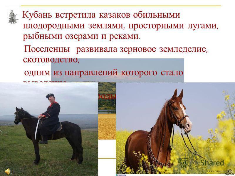 Кубань встретила казаков обильными плодородными землями, просторными лугами, рыбными озерами и реками. Поселенцы развивала зерновое земледелие, скотоводство, одним из направлений которого стало выведение черноморской породы лошадей.