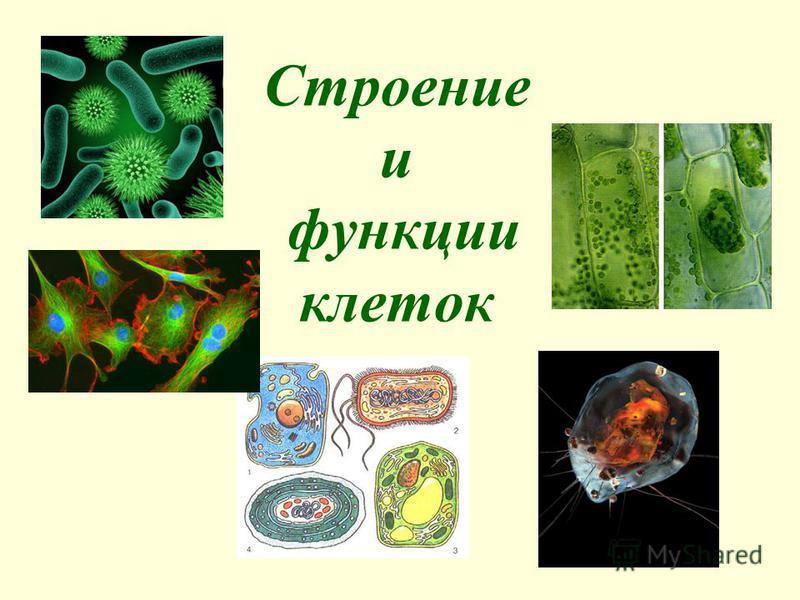 Строение и функции клеток