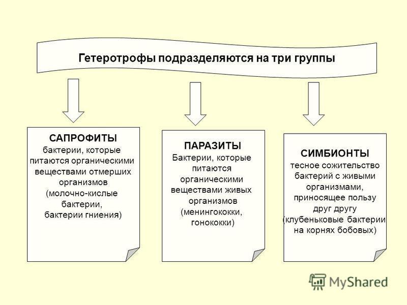 Гетеротрофы подразделяются на три группы САПРОФИТЫ бактерии, которые питаются органическими веществами отмерших организмов (молочно-кислые бактерии, бактерии гниения) ПАРАЗИТЫ Бактерии, которые питаются органическими веществами живых организмов (мени