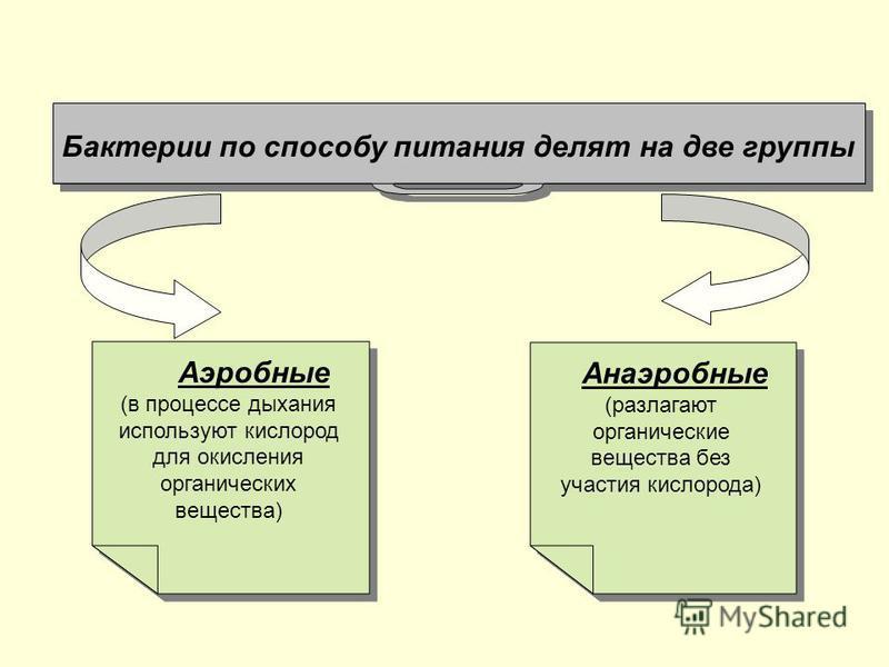 Бактерии по способу питания делят на две группы Анаэробные (разлагают органические вещества без участия кислорода) Анаэробные (разлагают органические вещества без участия кислорода) Аэробные (в процессе дыхания используют кислород для окисления орган