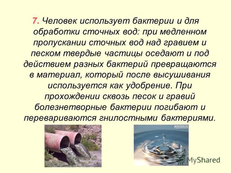 7. Человек использует бактерии и для обработки сточных вод: при медленном пропускании сточных вод над гравием и песком твердые частицы оседают и под действием разных бактерий превращаются в материал, который после высушивания используется как удобрен