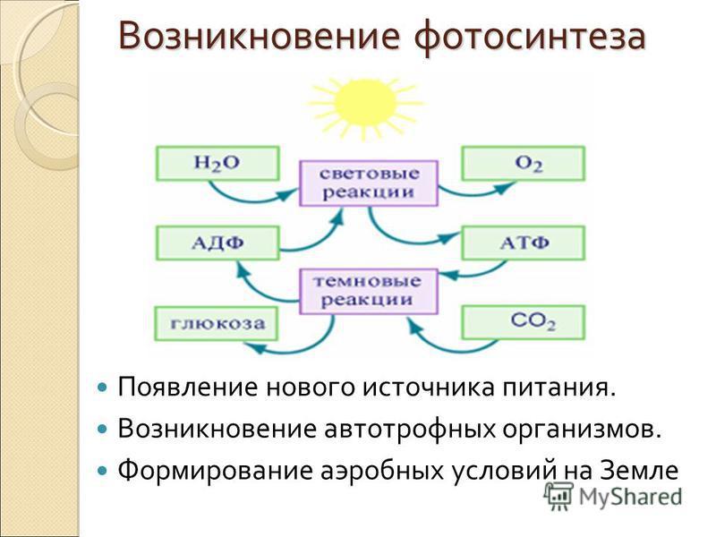 Возникновение фотосинтеза Появление нового источника питания. Возникновение автотрофных организмов. Формирование аэробных условий на Земле