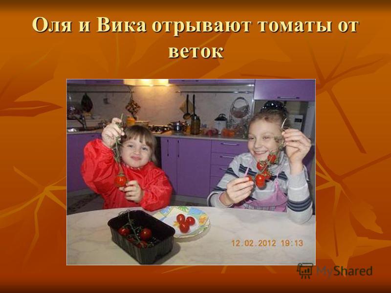 Оля и Вика отрывают томаты от веток