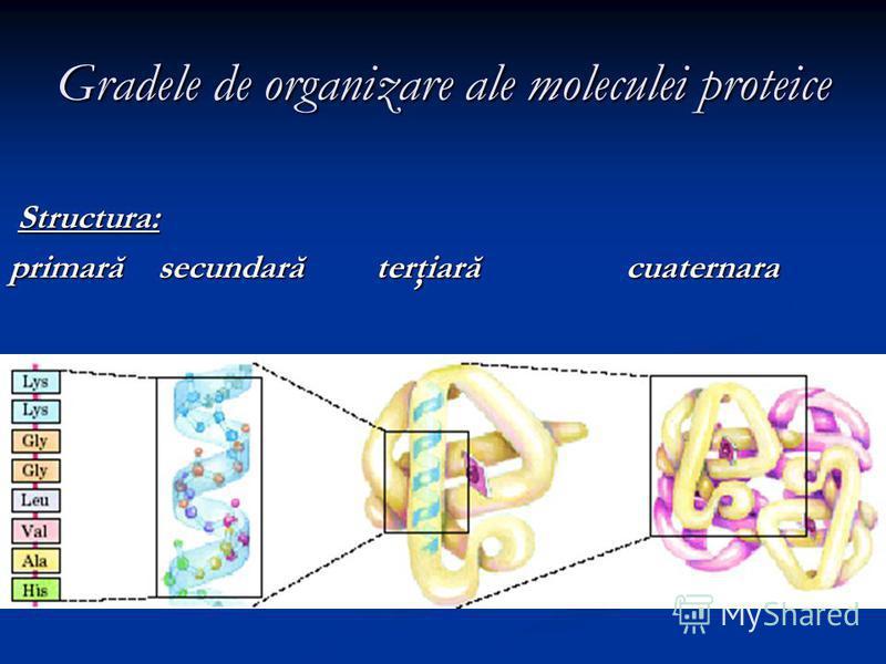 Gradele de organizare ale moleculei proteice Structura: Structura: primară secundară terţiară cuaternara
