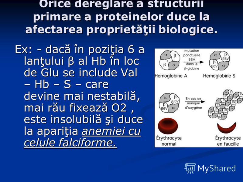 Orice dereglare a structurii primare a proteinelor duce la afectarea proprietăţii biologice. Ex: - dacă în poziţia 6 a lanţului β al Hb în loc de Glu se include Val – Hb – S – care devine mai nestabilă, mai rău fixează O2, este insolubilă şi duce la