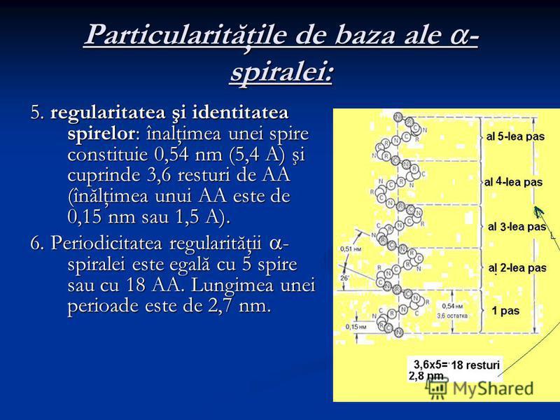 Particularităţile de baza ale - spiralei: 5. regularitatea şi identitatea spirelor: înalţimea unei spire constituie 0,54 nm (5,4 A) şi cuprinde 3,6 resturi de AA (înălţimea unui AA este de 0,15 nm sau 1,5 A). 6. Periodicitatea regularităţii - spirale
