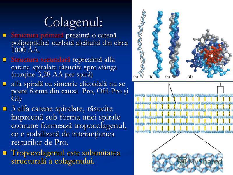 Colagenul: Structura primară prezintă o catenă polipeptidică curbată alcătuită din circa 1000 AA. Structura primară prezintă o catenă polipeptidică curbată alcătuită din circa 1000 AA. Structura secundară reprezintă alfa catene spiralate răsucite spr