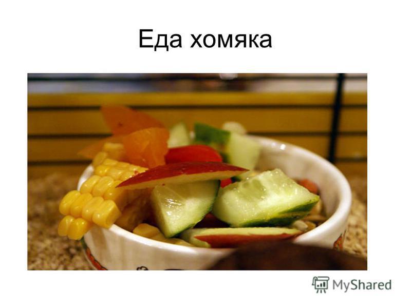 Еда хомяка