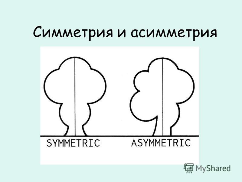 Симметрия и асимметрия