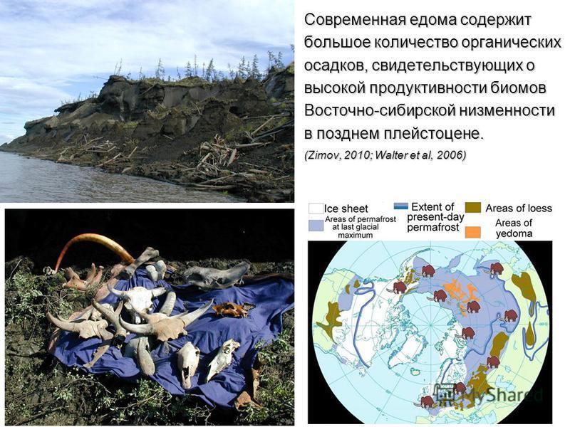 Современная едома содержит большое количество органических осадков, свидетельствующих о высокой продуктивности биомов Восточно-сибирской низменности в позднем плейстоцене. (Zimov, 2010; Walter et al, 2006)