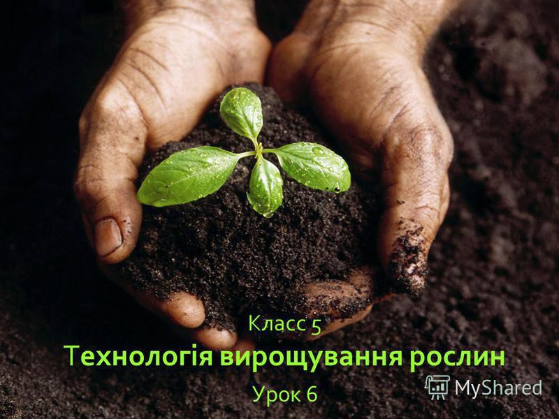Класс 5 Технологія вирощування рослин Урок 6