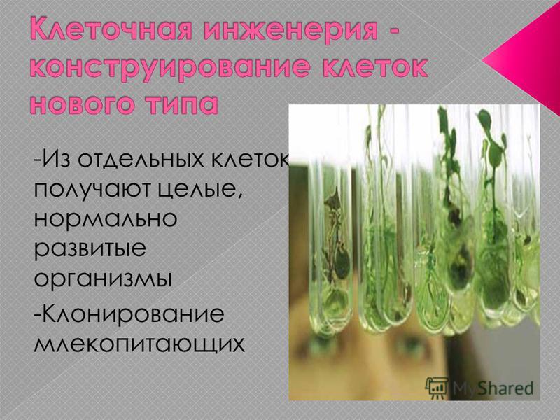 -Из отдельных клеток получают целые, нормально развитые организмы -Клонирование млекопитающих