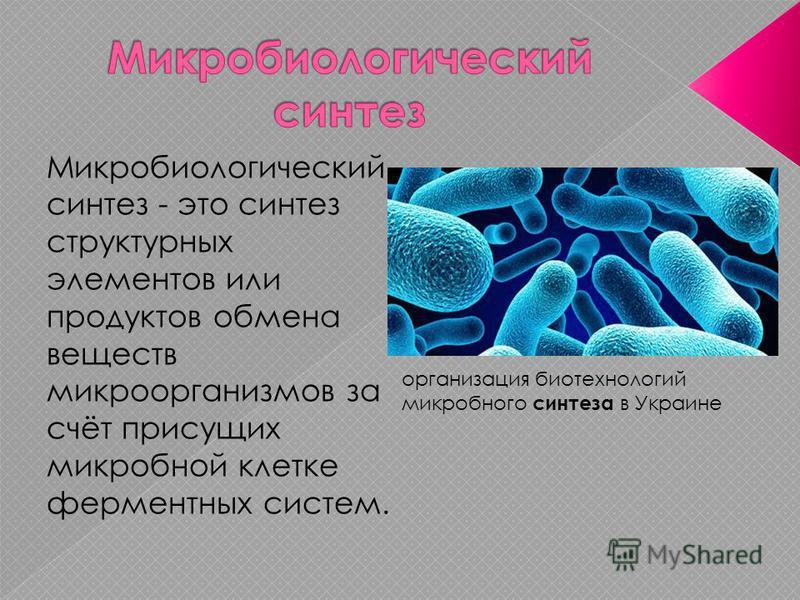 Микробиологический синтез - это синтез структурных элементов или продуктов обмена веществ микроорганизмов за счёт присущих микробной клетке ферментных систем. организация биотехнологий микробного синтеза в Украине