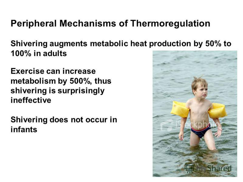 Peripheral Mechanisms of Thermoregulation Shivering augments metabolic heat production by 50% to 100% in adults Exercise can increase metabolism by 500%, thus shivering is surprisingly ineffective Shivering does not occur in infants