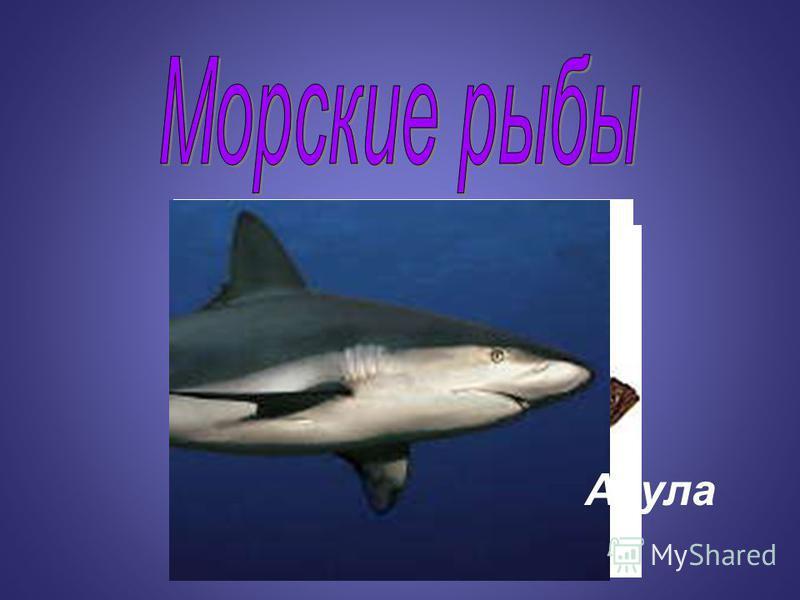 Сельдь Треска Камбала Акула