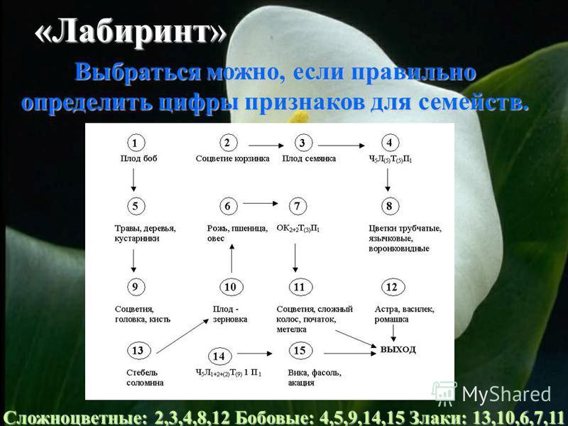 «Лабиринт» Выбраться можно, если правильно определить цифры признаков для семейств. Сложноцветные: 2,3,4,8,12 Бобовые: 4,5,9,14,15 Злаки: 13,10,6,7,11