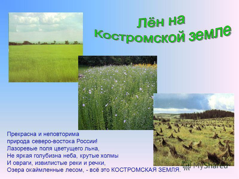 Прекрасна и неповторима природа северо-востока России! Лазоревые поля цветущего льна, Не яркая голубизна неба, крутые холмы И овраги, извилистые реки и речки, Озера окаймленные лесом, - всё это КОСТРОМСКАЯ ЗЕМЛЯ.