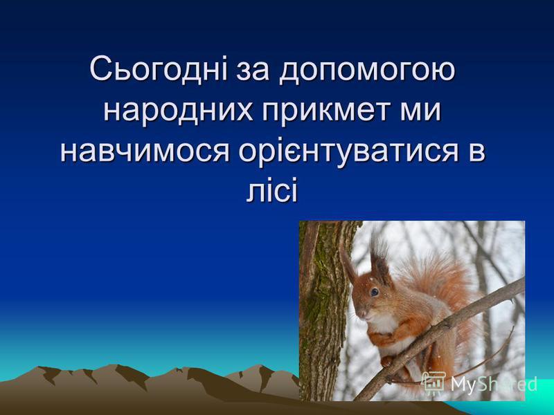 Сьогодні за допомогою народних прикмет ми навчимося орієнтуватися в лісі