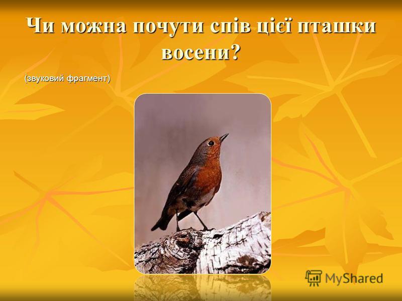 Як поводяться птахи восени? Лебідь Лелека Ластівка Ластівка