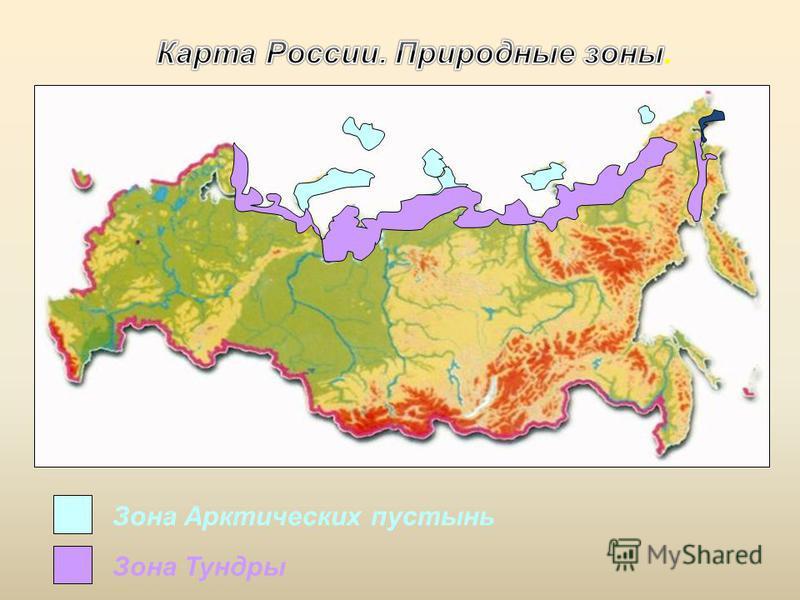Зона Арктических пустынь Зона Тундры