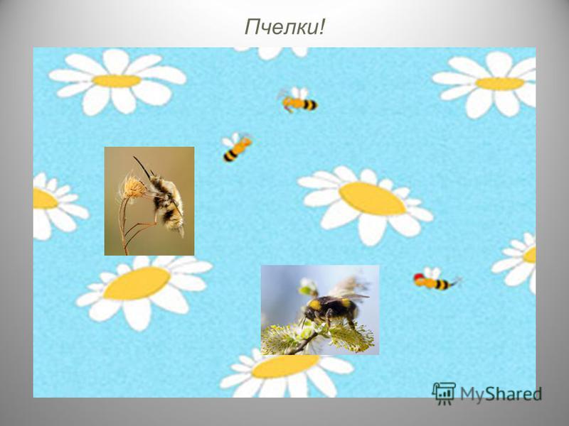 Пчелки!