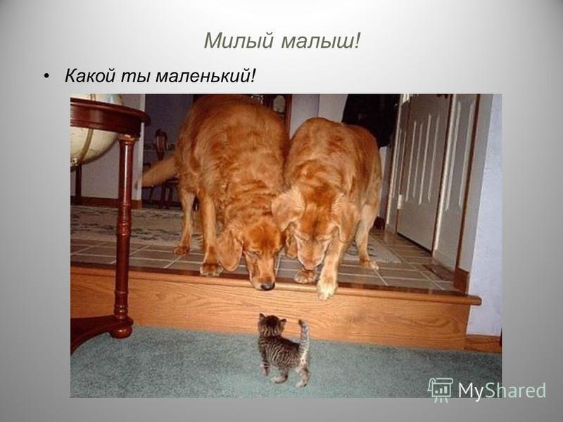 Милый малыш! Какой ты маленький!