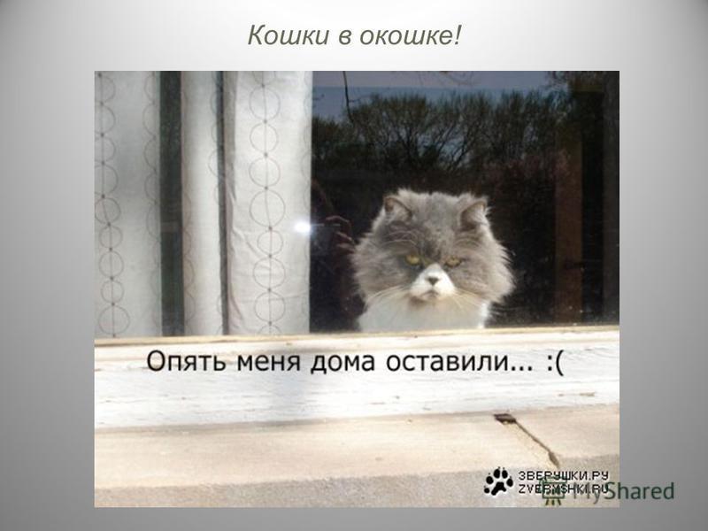 Кошки в окошке!
