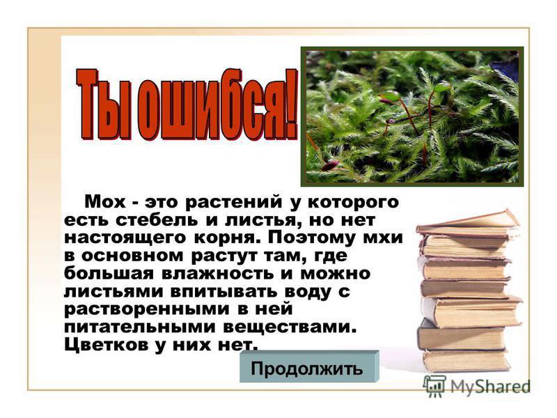 Мох - это растений у которого есть стебель и листья, но нет настоящего корня. Поэтому мхи в основном растут там, где большая влажность и можно листьями впитывать воду с растворенными в ней питательными веществами. Цветков у них нет. Продолжить