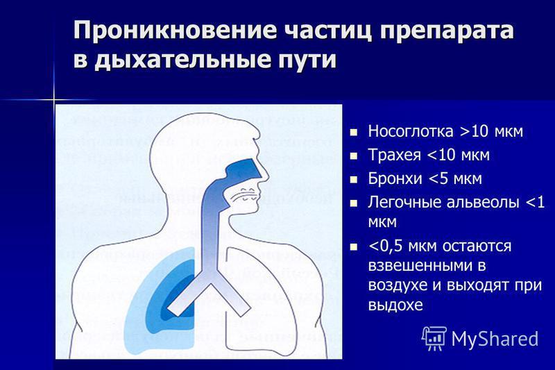 Проникновение частиц препарата в дыхательные пути Носоглотка >10 мкм Трахея <10 мкм Бронхи <5 мкм Легочные альвеолы <1 мкм <0,5 мкм остаются взвешенными в воздухе и выходят при выдохе