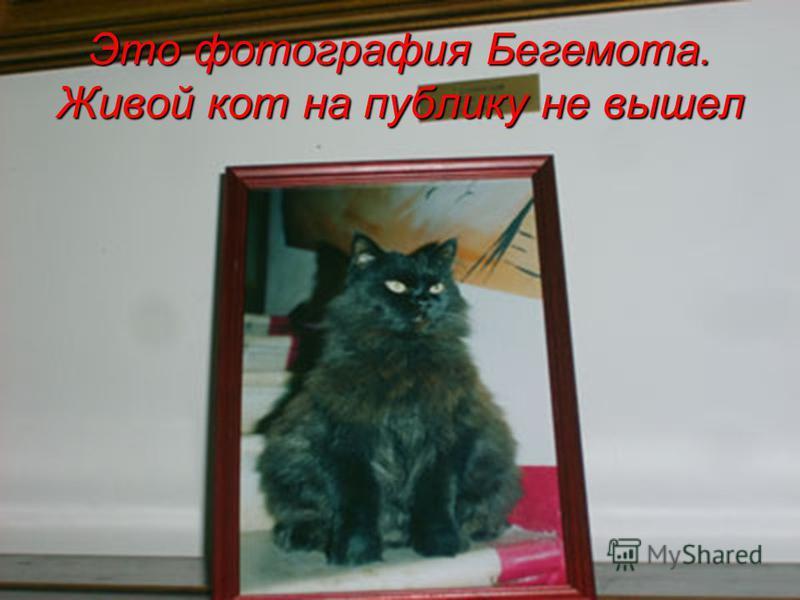 Это фотография Бегемота. Живой кот на публику не вышел