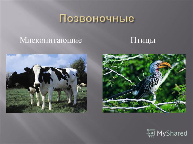 Млекопитающие Птицы