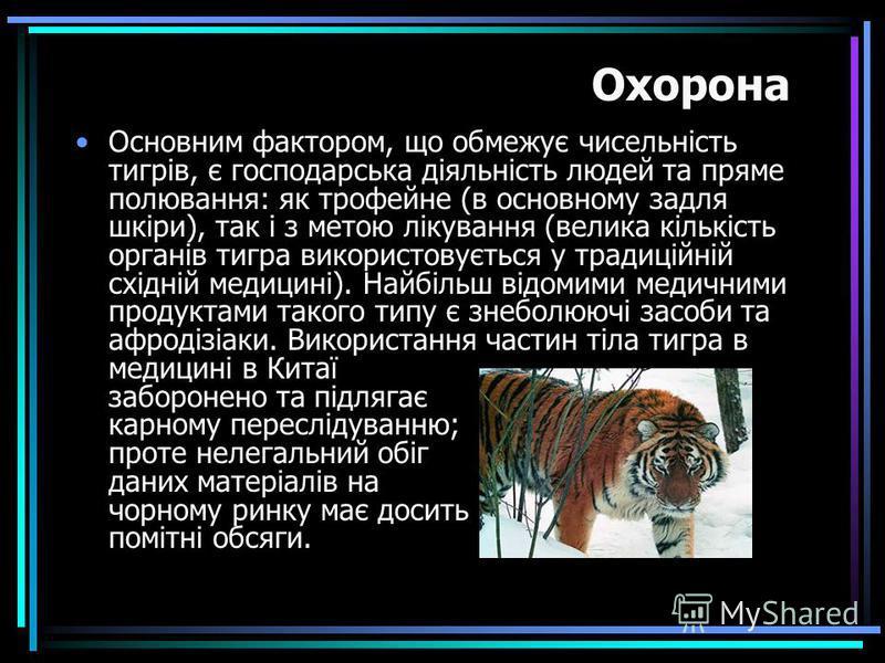 Основним фактором, що обмежує чисельність тигрів, є господарська діяльність людей та пряме полювання: як трофейне (в основному задля шкіри), так і з метою лікування (велика кількість органів тигра використовується у традиційній східній медицині). Най