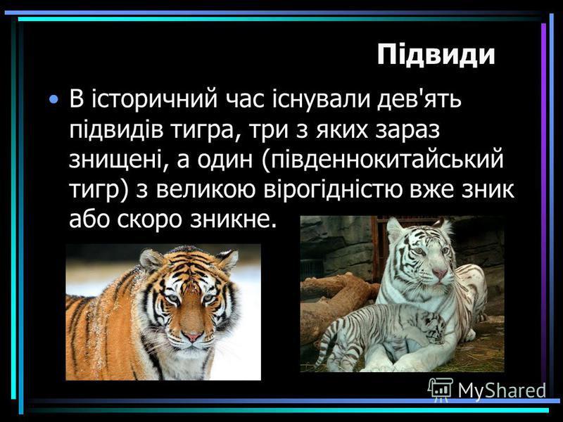 В історичний час існували дев'ять підвидів тигра, три з яких зараз знищені, а один (південнокитайський тигр) з великою вірогідністю вже зник або скоро зникне. Підвиди
