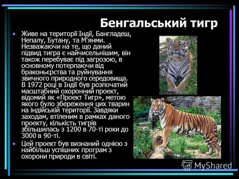 Живе на території Індії, Бангладеш, Непалу, Бутану, та М'янми. Незважаючи на те, що даний підвид тигра є найчисельнішим, він також перебуває під загрозою, в основному потерпаючи від браконьєрства та руйнування звичного природного середовища. В 1972 р