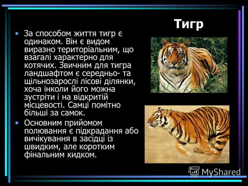 За способом життя тигр є одинаком. Він є видом виразно територіальним, що взагалі характерно для котячих. Звичним для тигра ландшафтом є середньо- та щільнозарослі лісові ділянки, хоча інколи його можна зустріти і на відкритій місцевості. Самці поміт